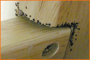 traces de punaises de lits. Black Bedroom Furniture Sets. Home Design Ideas