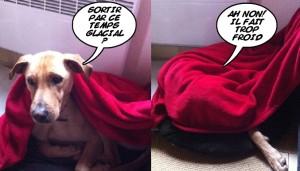 la vie d 39 un chien renifleur de punaises de lit dogscan. Black Bedroom Furniture Sets. Home Design Ideas