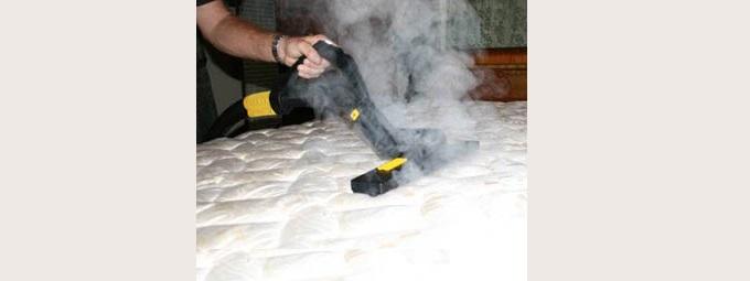 Dogscan en expertise anti punaise de lit dogscan - Punaise de lit traitement vapeur ...