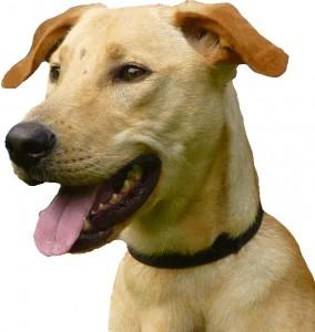 rocky chien punaises