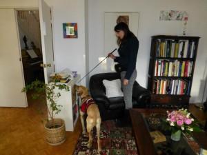 Rocky, chien détecteur de punaises de lit, en train d'inspecter un salon