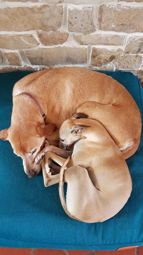 Rocky et Kiba sieste