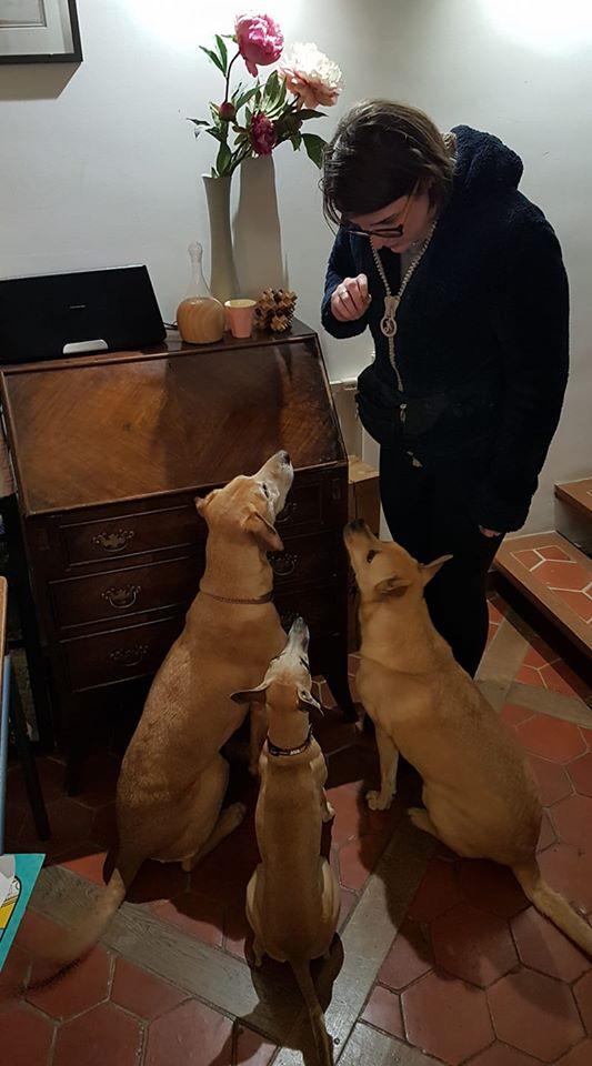 Entrainement chiens détecteurs punaises de lit