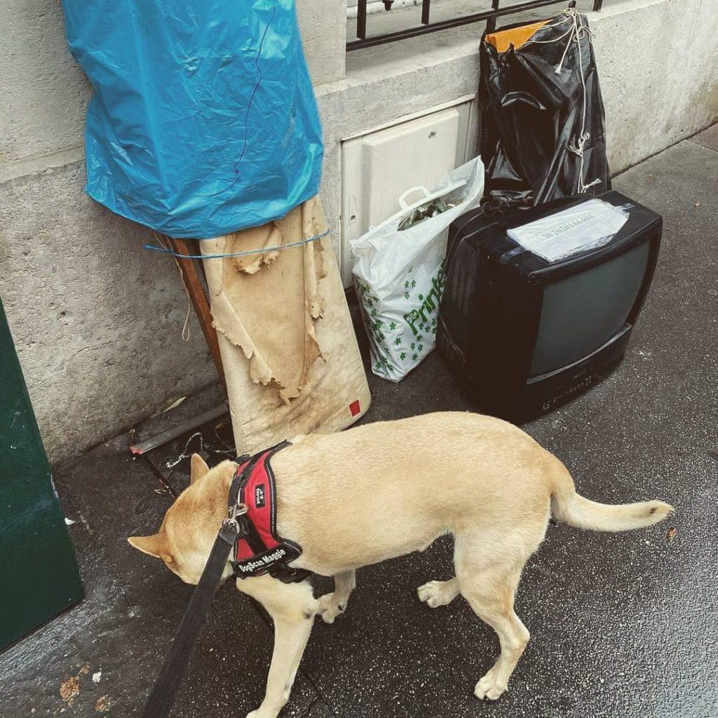 recherche des punaises de lit chien