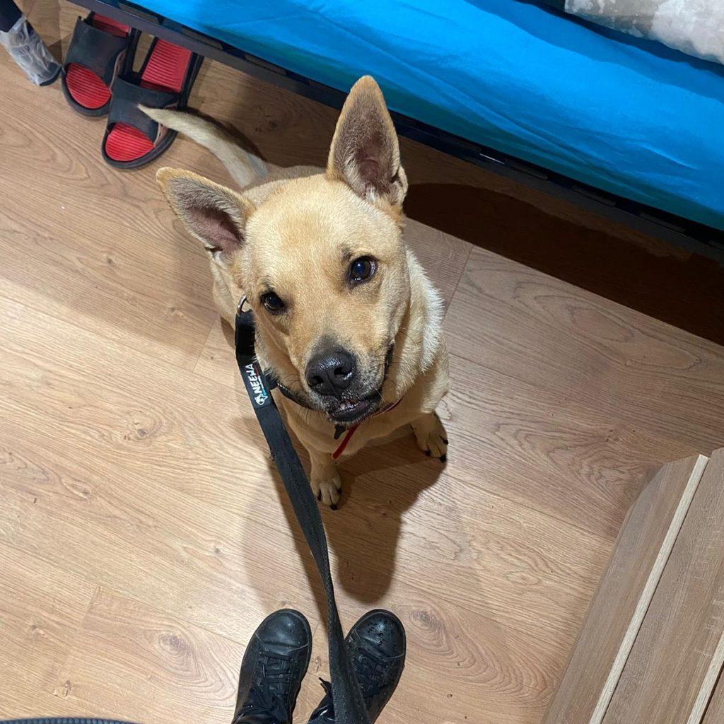 chien detecteur de punaises
