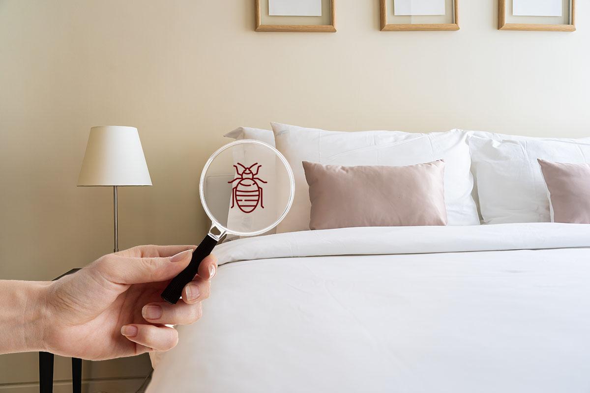 Punaise de lit
